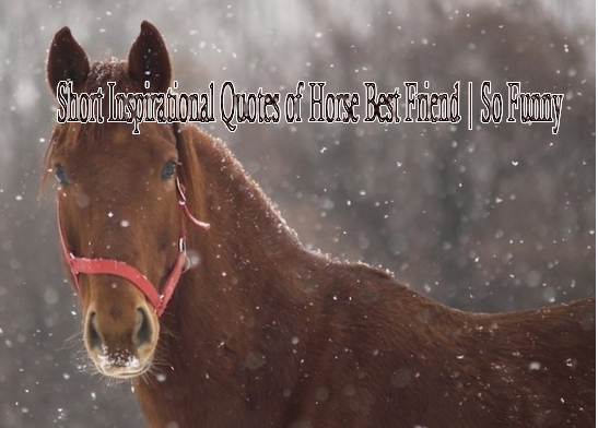 #quotes_of_horse #short_inspirational_quotes #qoutes_of_life