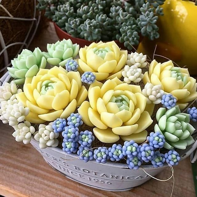Photo of succulent how to plant|Rose succulents |succulents pots|succulents planting| succulents arrangements