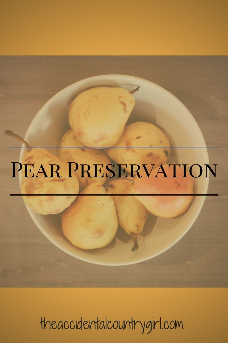 Stocking Up: Pears -- Pears are relatively simple to work with and there are only a couple of things to keep in mind. First, you need to wait until they are ready. Picking them too early results in very hard, difficult to work with produce. It takes some patience and there is a fine line between when they are ready...