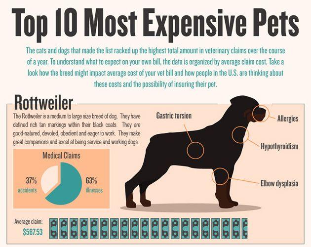 Top 10 Most Expensive Pets Petpremium Com Pets Most Expensive Pet Breeds