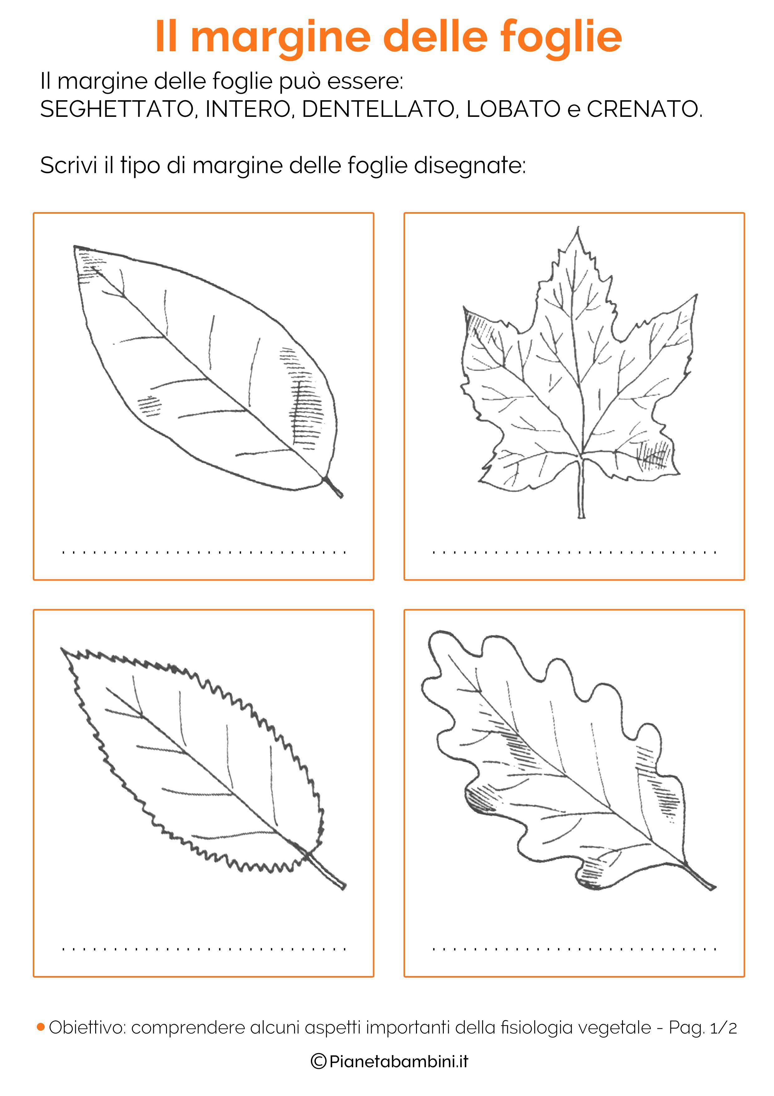 Classificazione delle foglie schede didattiche da - Modello di foglia per bambini ...