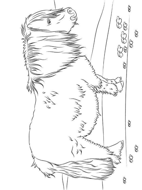 Kleurplaten Dieren Paarden Shetland Kleurplaat