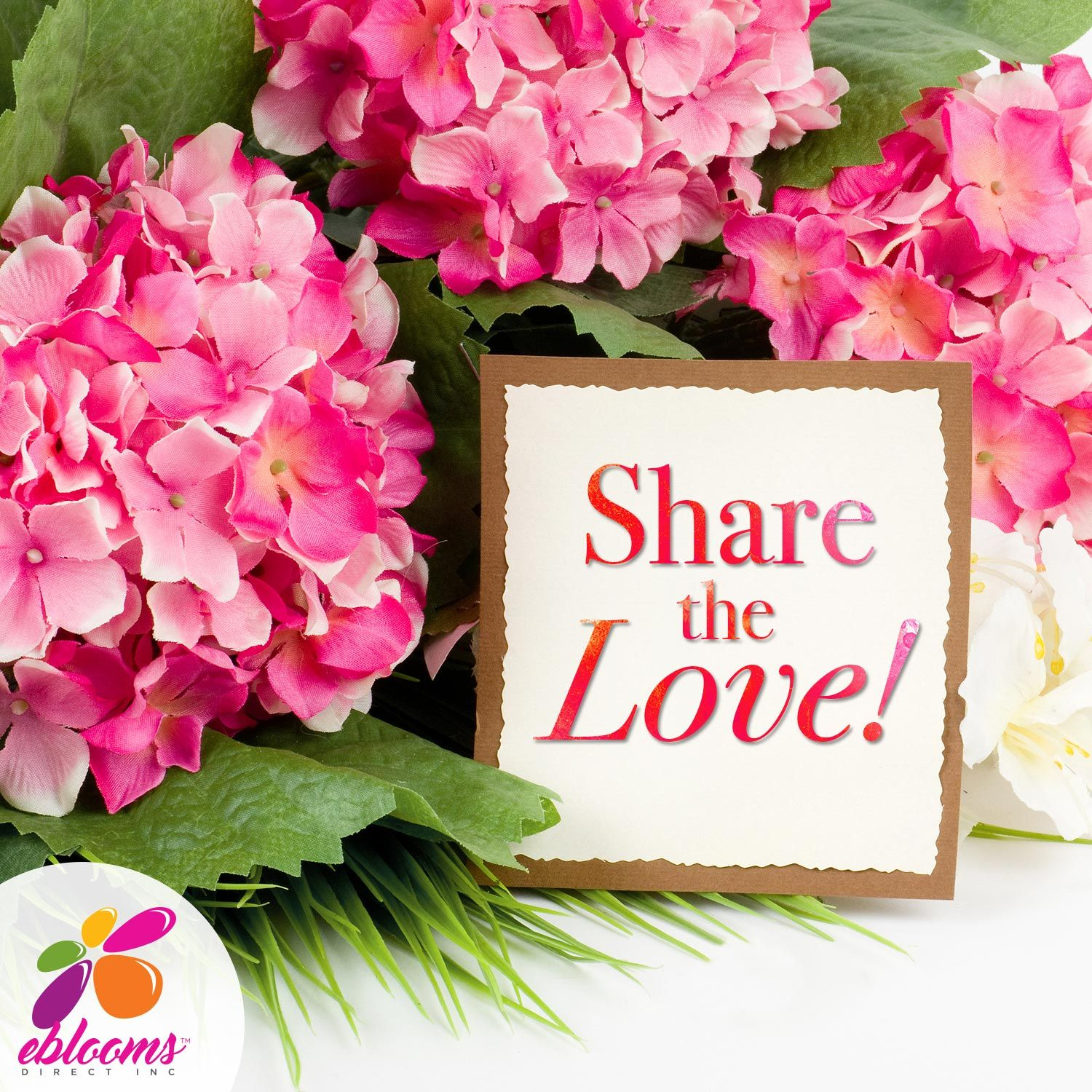 Hydrangea Airbrushed | Support small business and Products