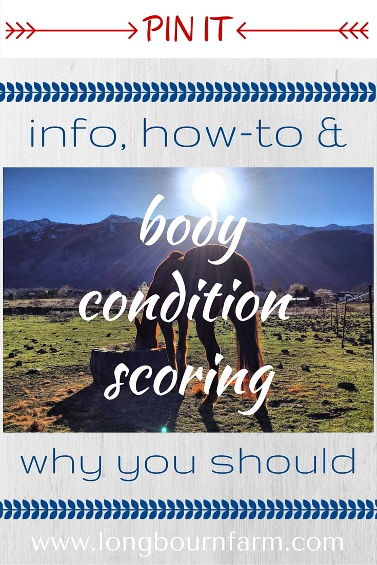 Body Condition Scoring for All Species Body condition