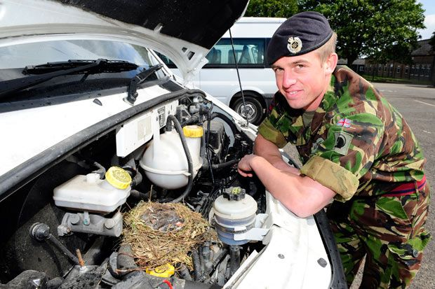 A mother thrush laid five eggs in the engine of a hired minibus at Claro Barracks, Catterick Garrison, North Yorkshire. The Army had been renting the vehicle for 30 pounds a day and have to wait for the birds to fly the nest before they can return it; it has cost them about 1,000 pounds so far.