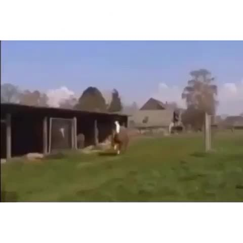 """Watch * Worldstar *'s Vine, """"Everybody should live life with the unbridled joy of this leaping llama. (credit: my bud HappyJewTaliaN ) #motivation"""""""