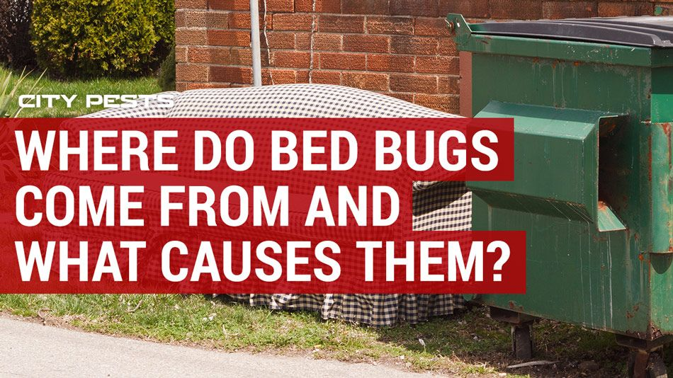Where do bed bugs come from and what causes them to come