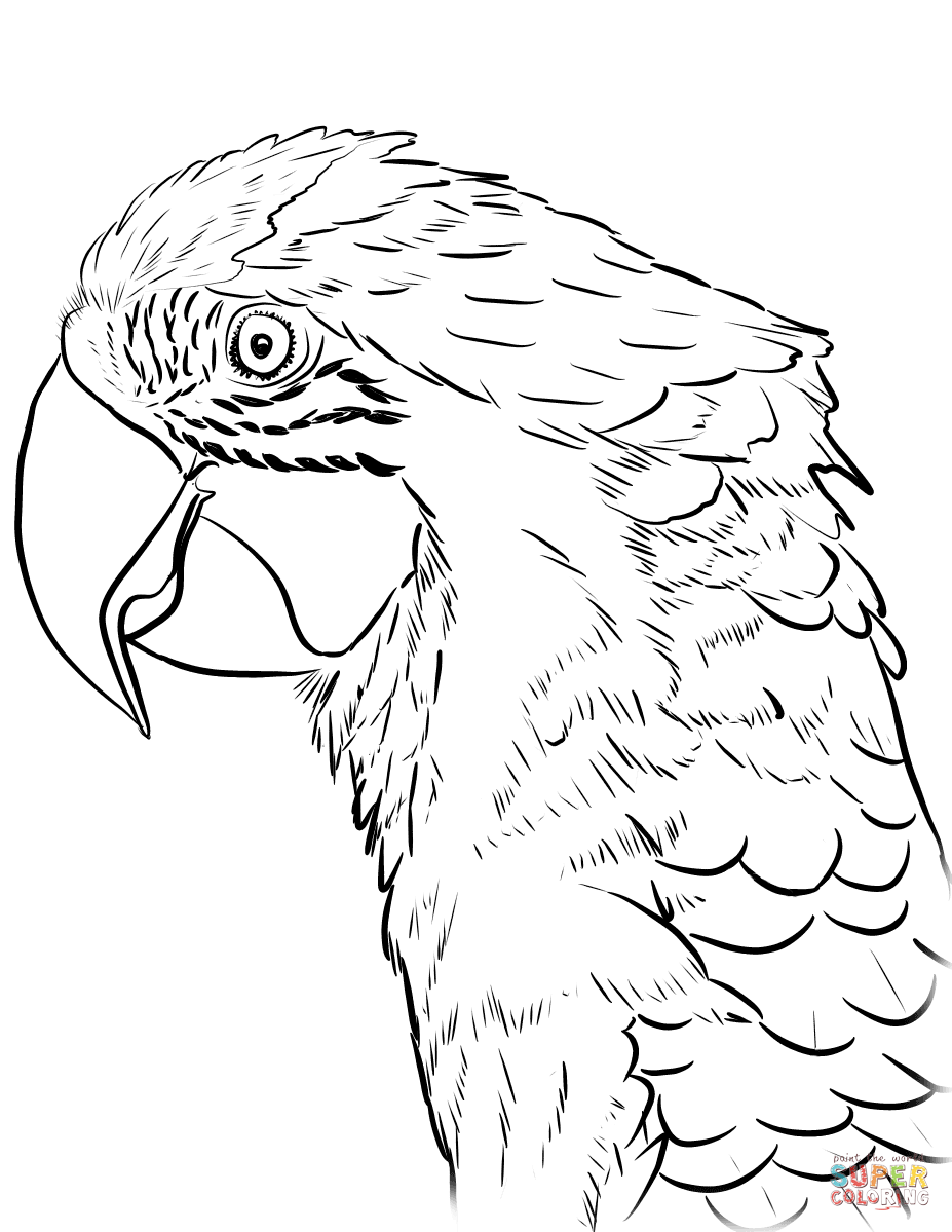 Head Of Macaw Coloring Page Free Printable Coloring Pages Bird Coloring Pages Macaw Art Coloring Pages