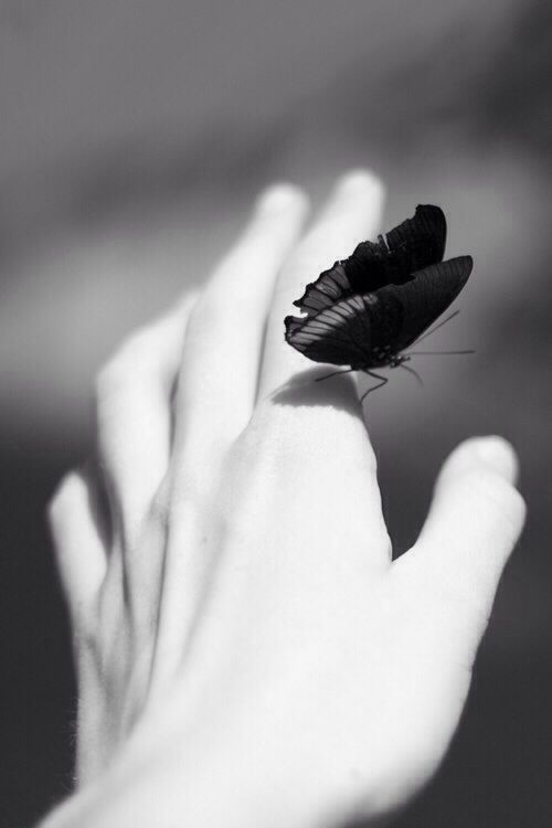 Be As Free And As Lovely As A Butterfly Gracesway White Photography Black And White Pictures Black White Photos