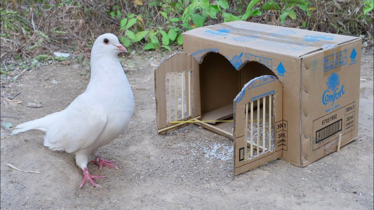 Best bird trap with two doors closed how to make a house