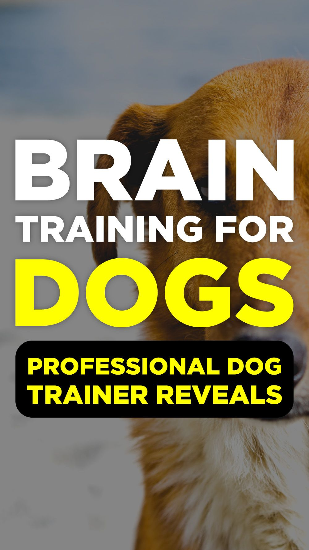 Brain Training For Dogs Review Dog Training Dog Training Tools