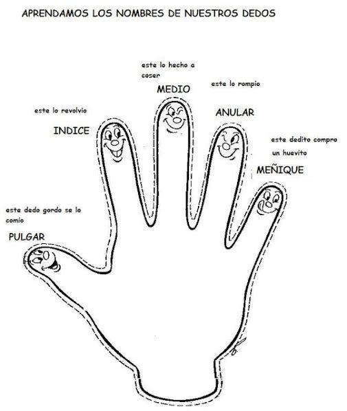 El Curpo Humano Fichas Para Imprimir Recursos Para El Maestro Actividades Del Cuerpo Humano Nombres De Los Dedos Partes Del Cuerpo Preescolar