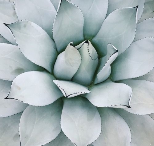 classy pictures of cactus house plants. Classy The Issue  2015 Pinterest