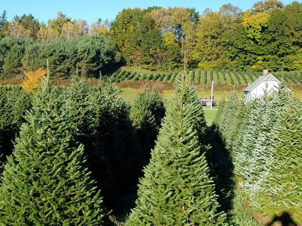 Snowshoe Valley Christmas Tree Farm Circa Old Houses Old Houses For Sale And Historic Real Estate Listings Tree Farms Farm