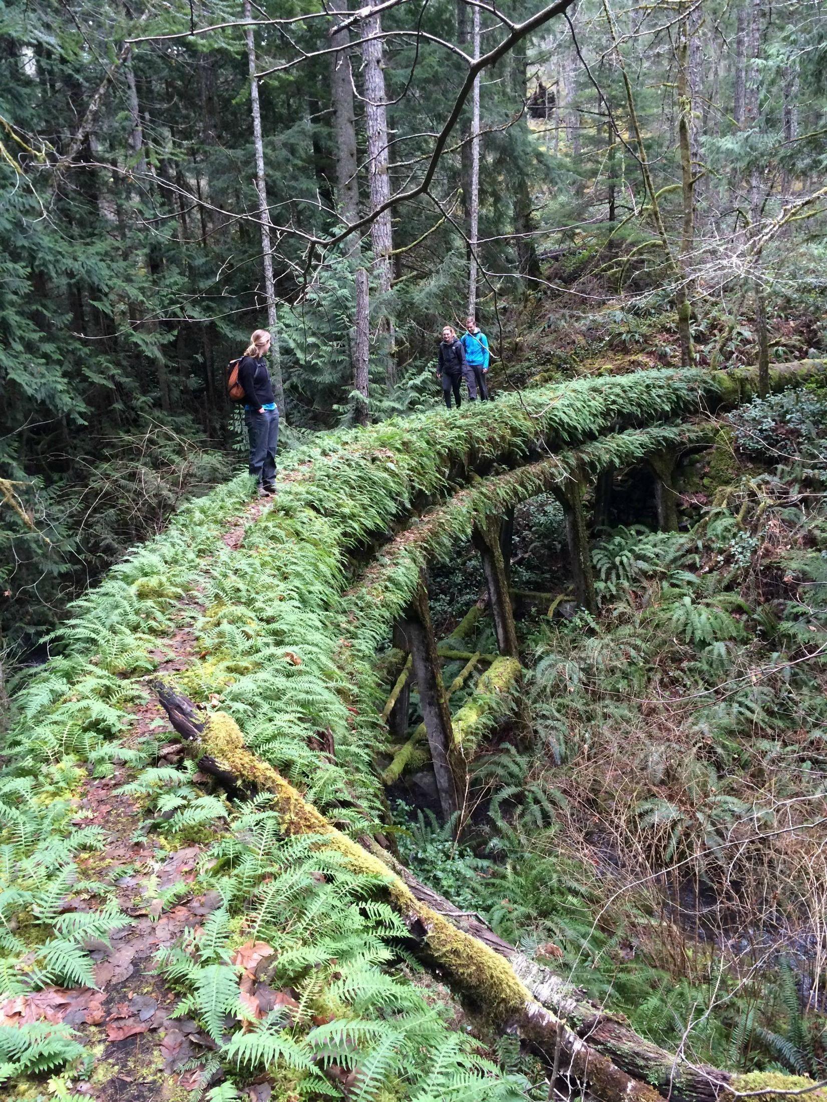 Sooke Flow Line  Built 1912, abandoned 1970-2009 in Sooke, BC