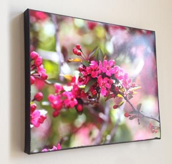 Pink Flowers - Mounted. Nature photography