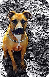 8/26/16 Dallas, GA Boxer. Meet Dozier, a dog for