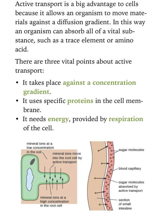 root hair cell active transport diagram