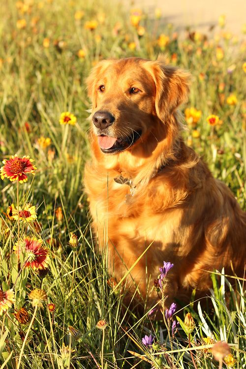 Isn T Finn The Cutest Golden Retriever The Sweet Dog Is Having