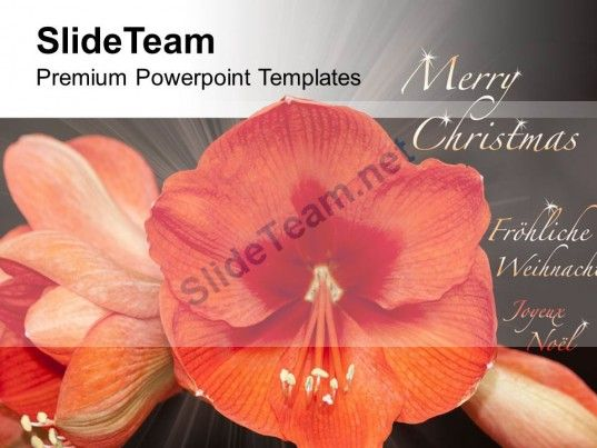 Beautiful Flowers For Wishes Merry Christmas PowerPoint Templates - christmas powerpoint template