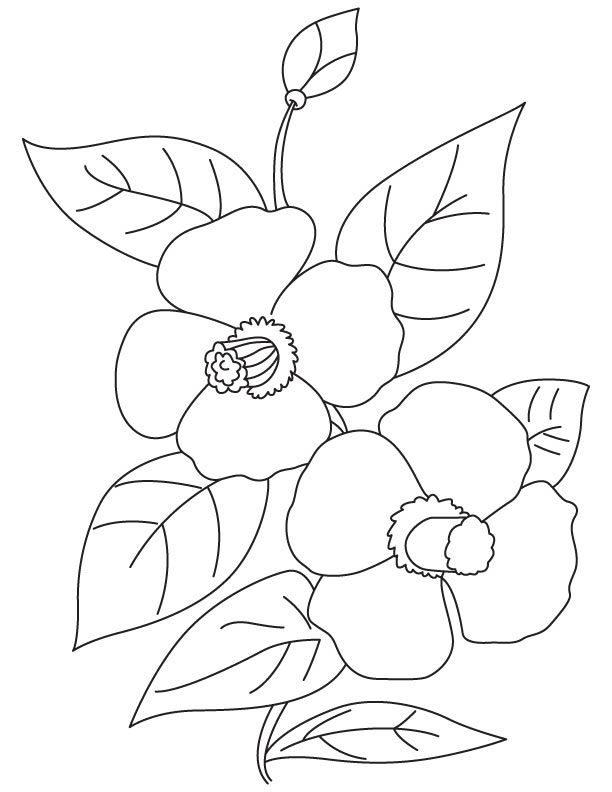 Camellia Flowers Coloring Page Easy Drawings Coloring Pages Flower Art