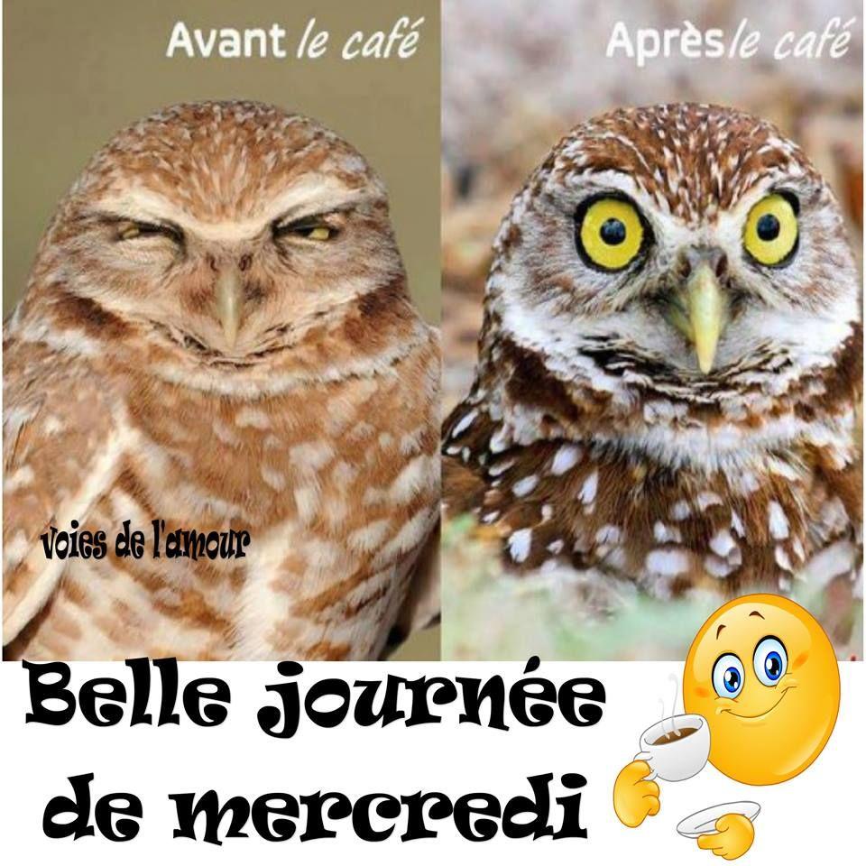 Avant le café. Après le café. Belle journée de mercredi | Bon mercredi humour, Mercredi et ...