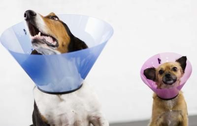 How To Remove Pet Stitches Ehow Dog Cone Protective Dogs Homemade Dog Cone