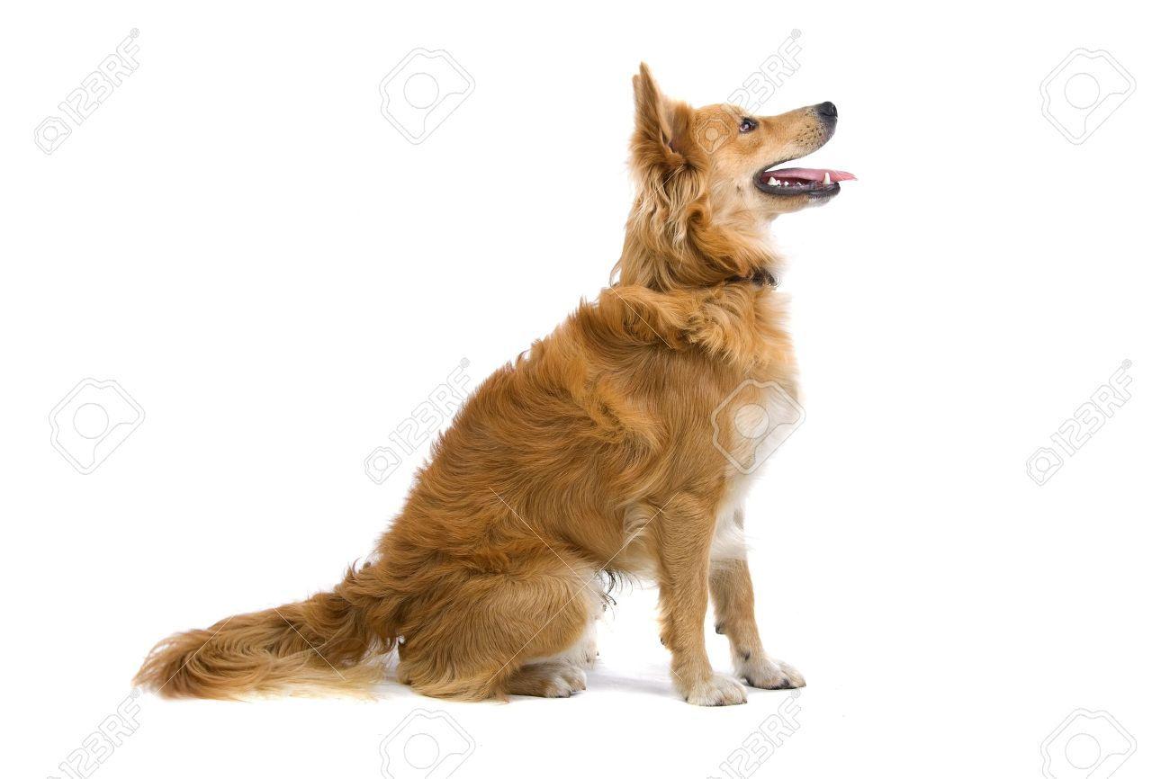 dog profile google search freelance logo design assets pinterest. Black Bedroom Furniture Sets. Home Design Ideas