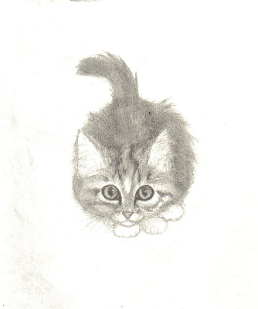 Kitten pencil drawing pencil drawings of kittens images about kitten drawings on
