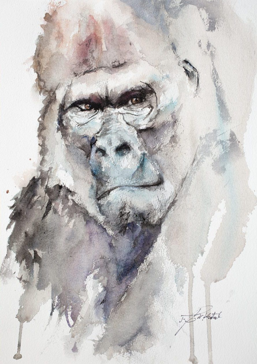 Silverback Gorilla Original Watercolour Paintings Of Wild