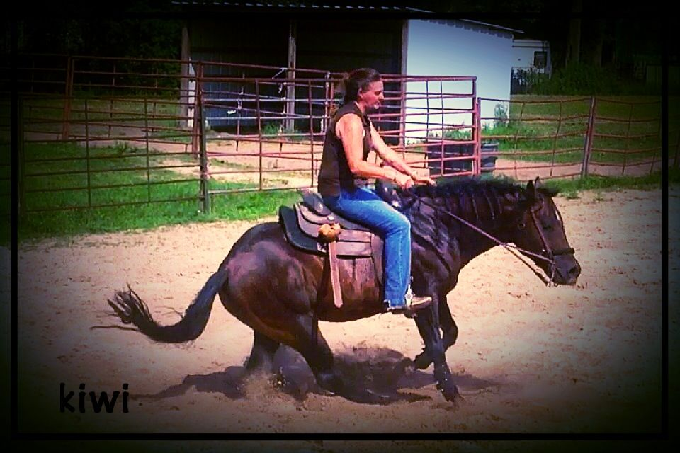Reining Lessons and training