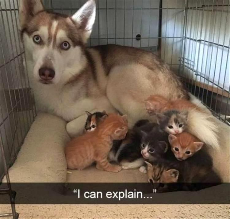 18 Funny Animal Pictures Of The Day #funnyanimalpictures