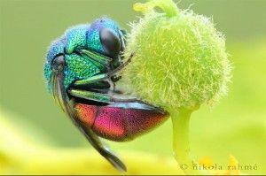 animais-coloridos-16