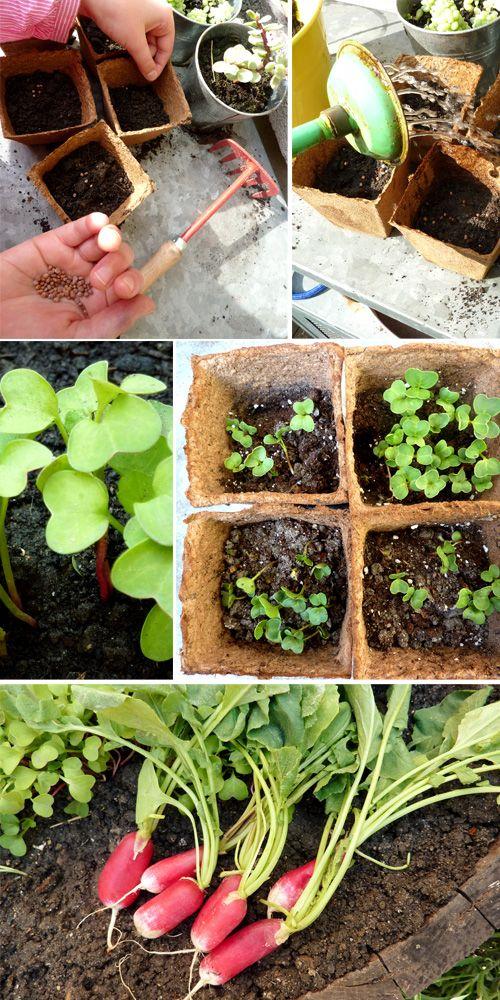 une activit facile pour les enfants planter des radis grandir avec nathan the garden. Black Bedroom Furniture Sets. Home Design Ideas