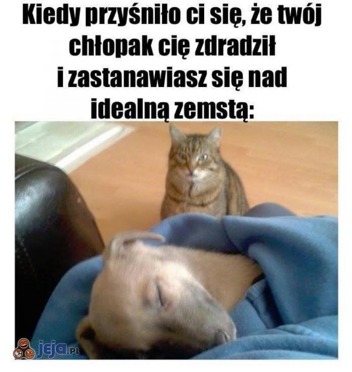 Kot Pies Memy Polska Tablica Pinterest Funny Humor Und Haha