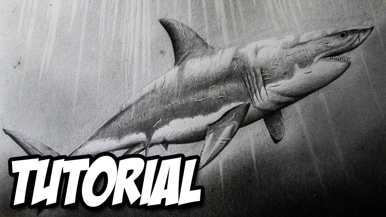 Cómo Dibujar Un Tiburón Blanco Paso A Paso A Lápiz