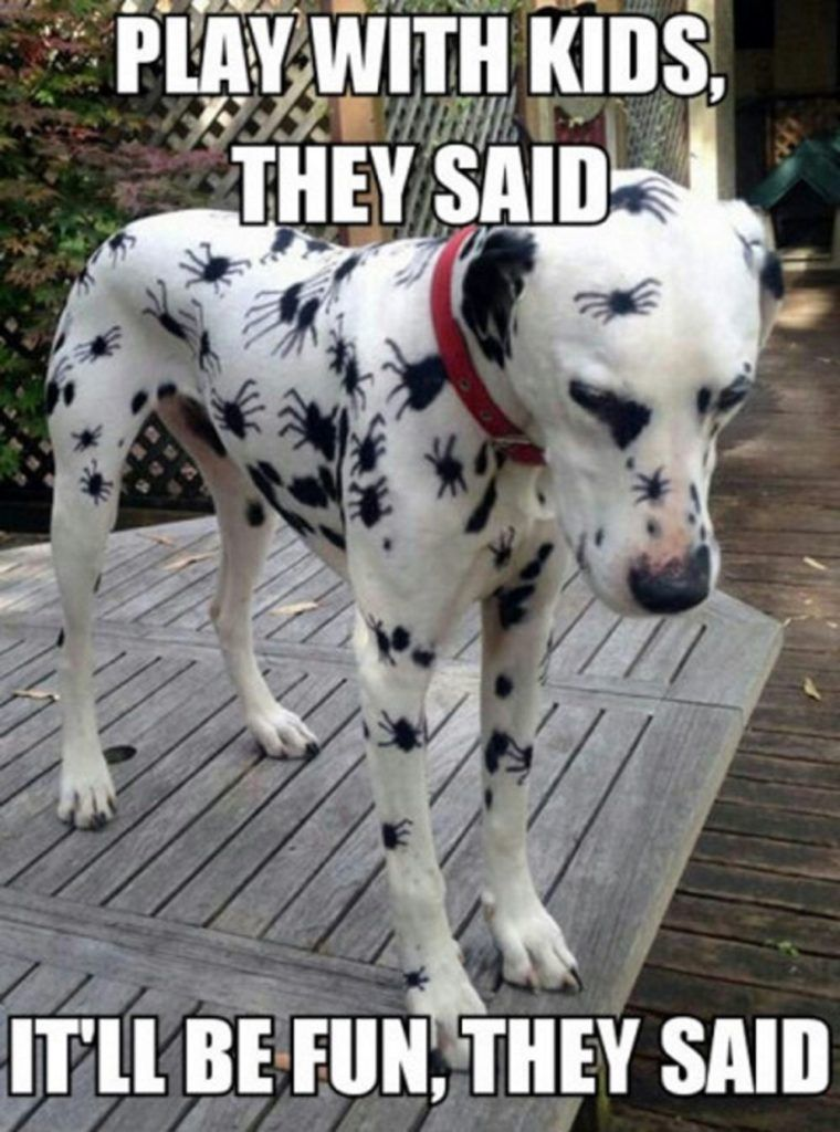 Latest Funny Dogs Funny Animal Memes Of The Day – 52 Pics Ep21 - Lovely Animals World Funny Animal Memes Of The Day – 52 Pics Ep21 - Lovely Animals World 2