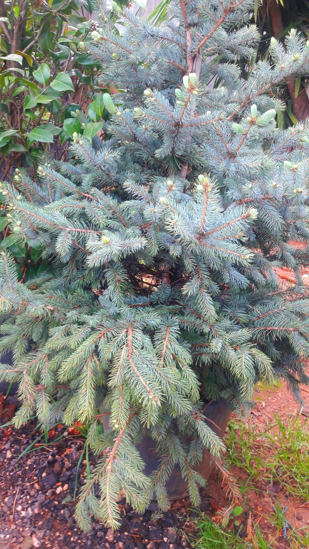 شجرة الياسمين Home Decor Decals Decor Home Decor