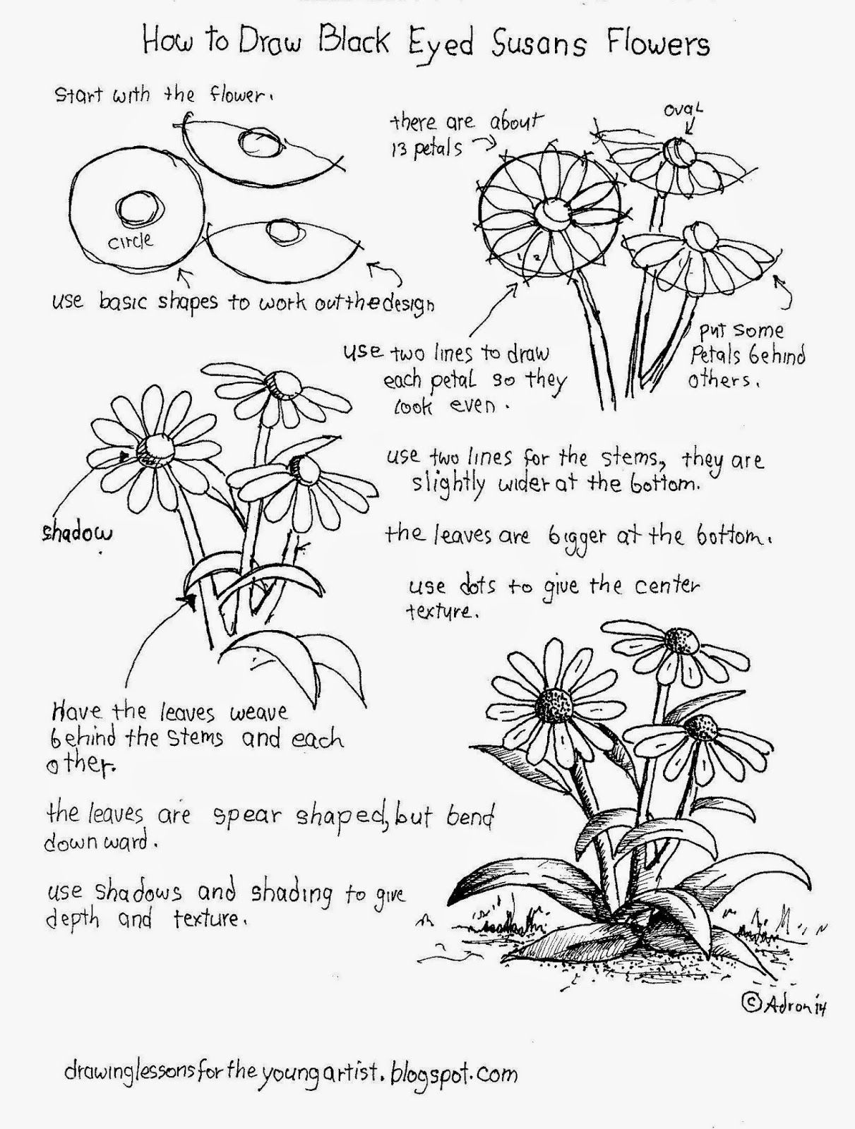 How To Draw Black Eyed Susan Flowers, Free Worksheet (How to
