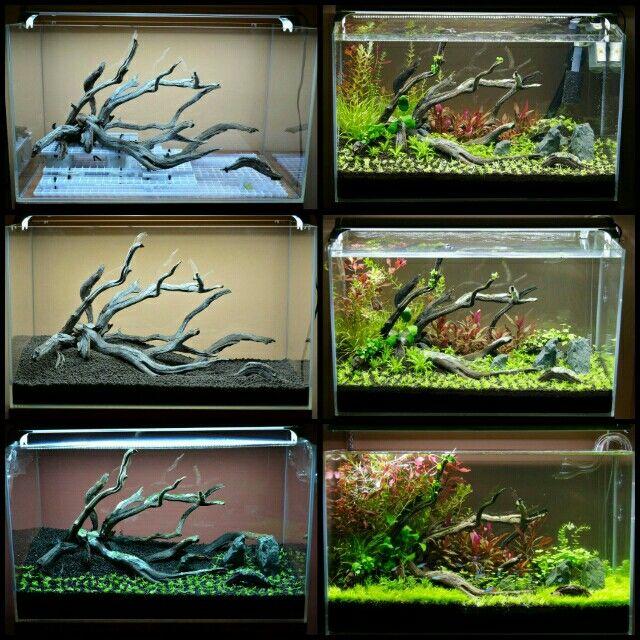 Aquascape Made With Egg Crate Ikan Akuarium Hewan Tanaman