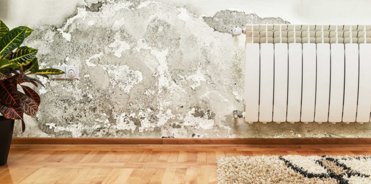 Moisissure Au Mur Comment S En Debarrasser Revetement Mural Interieur Moisissure Mur