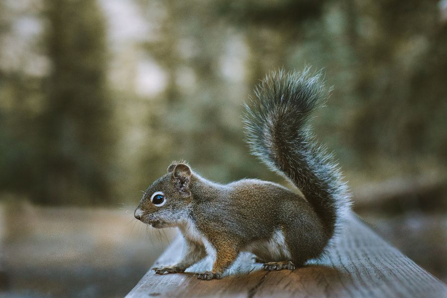 Camp Friend by Forrest Mankins - Photo 237174127 / 500px