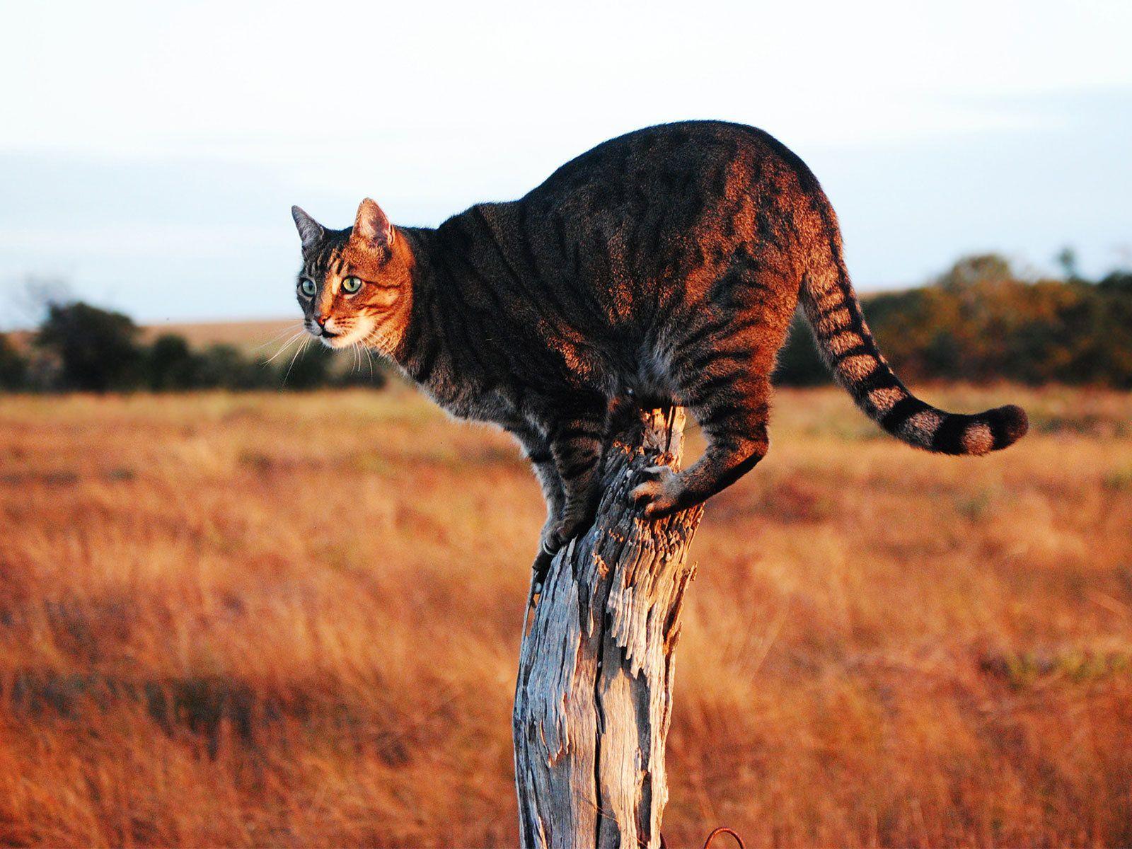 Кошка саванна (фото): покорный и ласковый гепард | Кошки ...