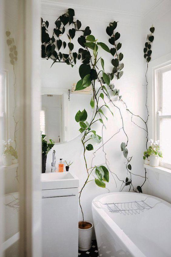 inspiration till uppdateringar hemma interior pinterest bathroom plants indoor climbing. Black Bedroom Furniture Sets. Home Design Ideas