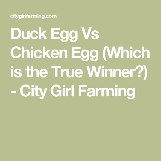 Duck Egg Vs Chicken Egg (Which is the True Winner?) - City Girl Farming