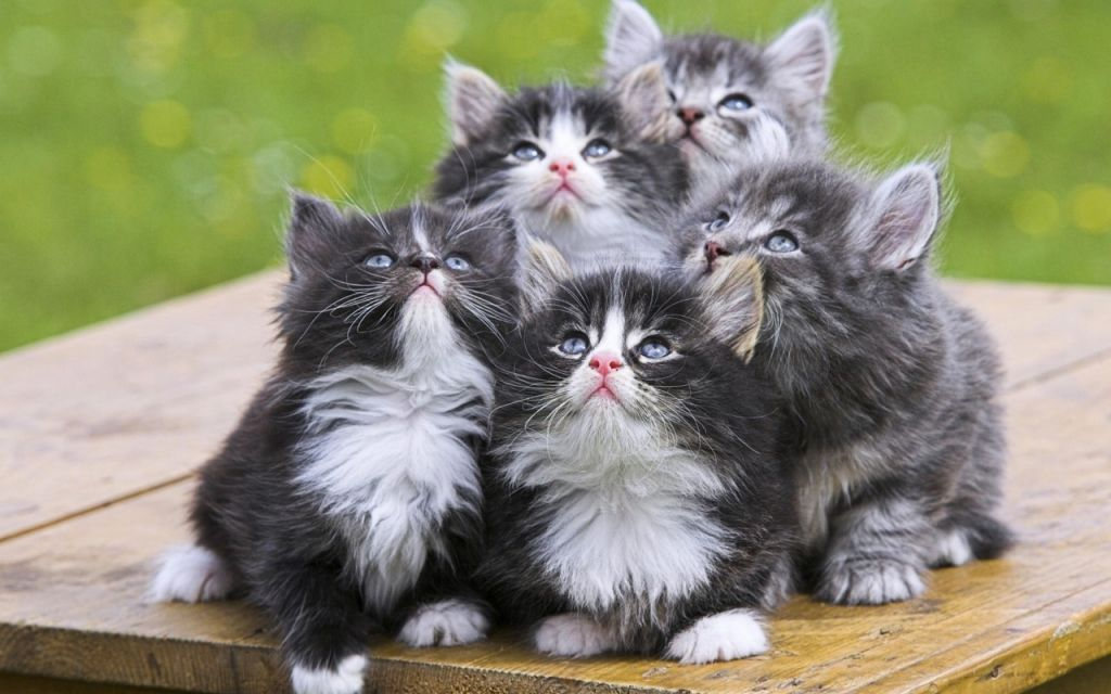 The cutest bunch of kittens I've seen.