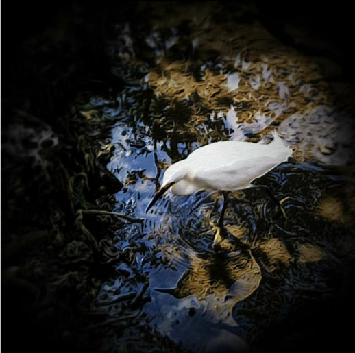 © Shirley Drevich 2012 – 'Key Largo' – Apps Used – Camera+, Snapseed, MokuHanga, Filterstorm