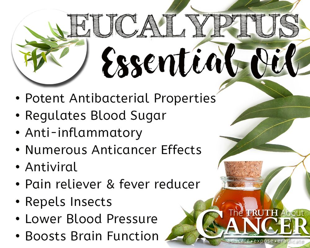 Image result for benefits of eucalyptus essential oil