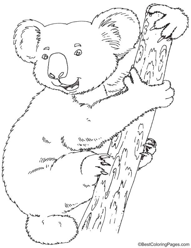 Koala Coloring Page Bear Coloring Pages Koala Drawing Bunny