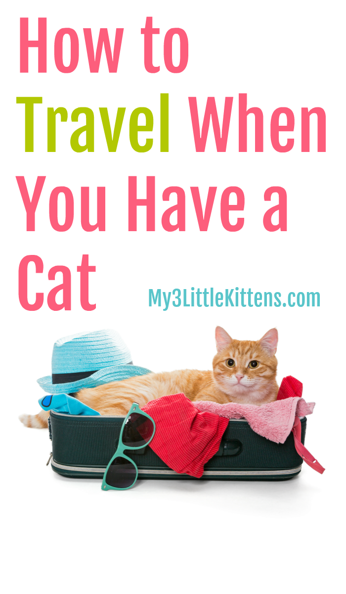 How To Travel When You Have A Cat My 3 Little Kittens Cat Care Cat Having Kittens Cat Training Scratching